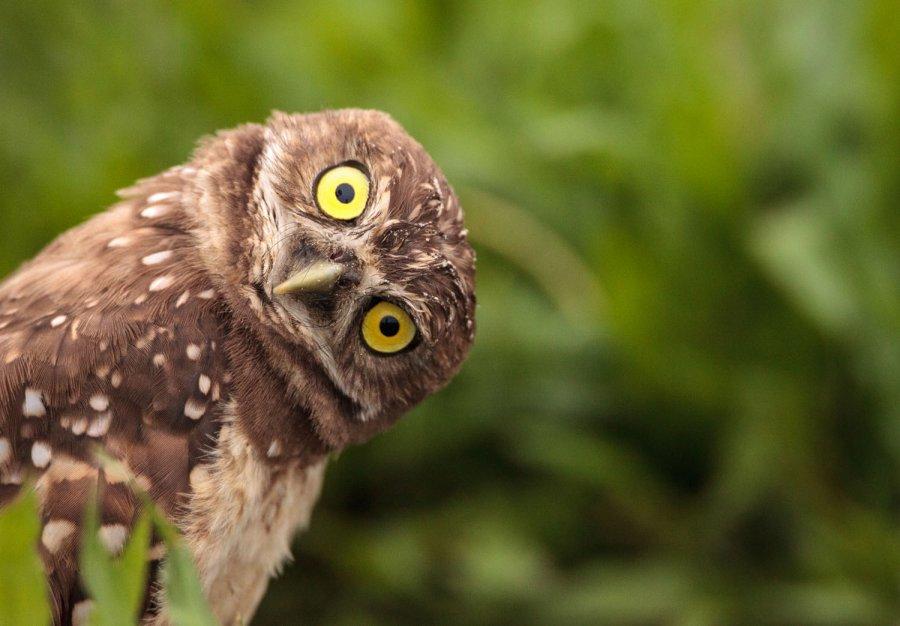 OWL BIRD WATCH  EVENT IN THE COMMUNITY